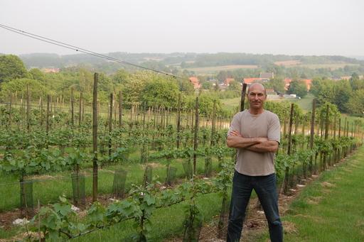bruno in wijngaard