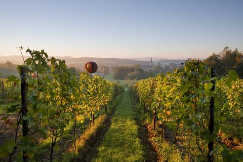 uitzicht wijndomein
