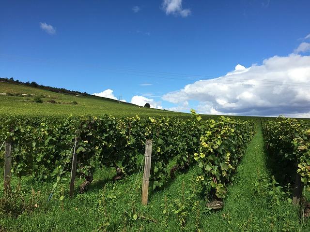 wijngaard bourgogne