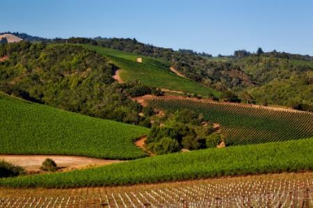 wijn napa valley