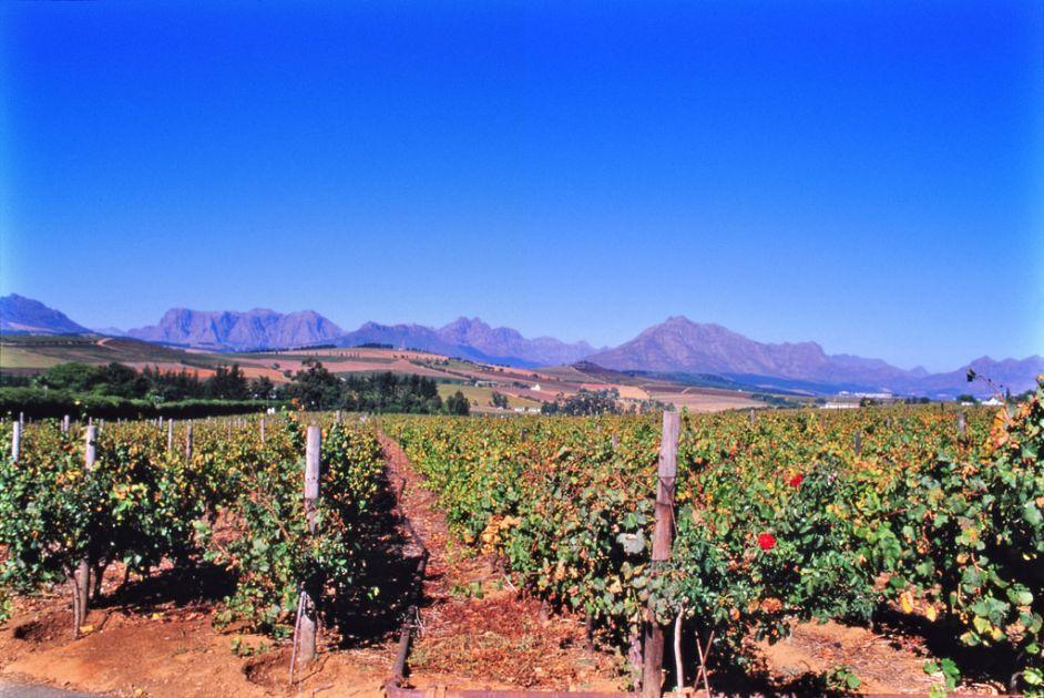 wijnrank stellenbosch